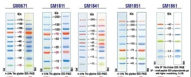 动态:western Blotting蛋白研究相关产品推荐